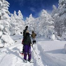 北八ヶ岳でスノーシュー♪樹氷の林を歩けば野生動物がひょっこり顔を出すことも…?
