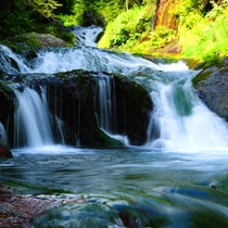 おしどり隠しの滝。新緑から紅葉まで、神秘的な光景を見ることができます。