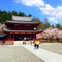 聖光寺の桜。本州で最後に咲くソメイヨシノとして有名です。GWが見ごろです。