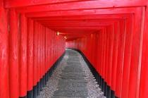神徳稲荷神社鳥居トンネル