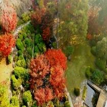 客室からの日本庭園
