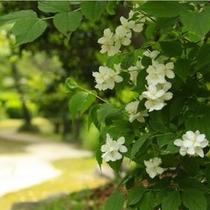 日本庭園_16