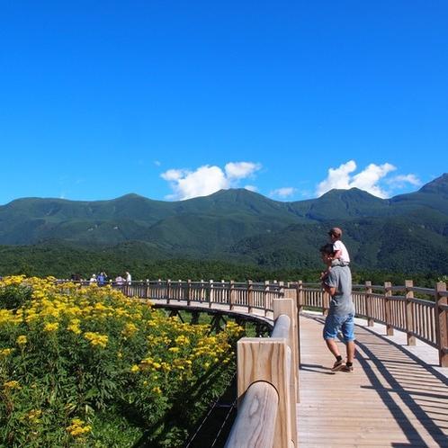 【観光】知床五湖 高架木道