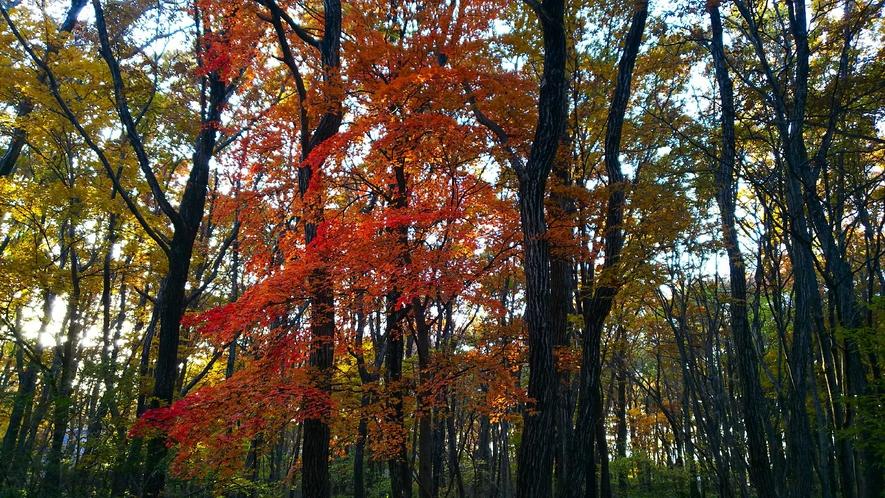 コテージ敷地内の紅葉