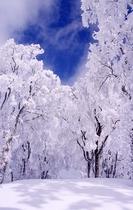 氷ノ山樹氷