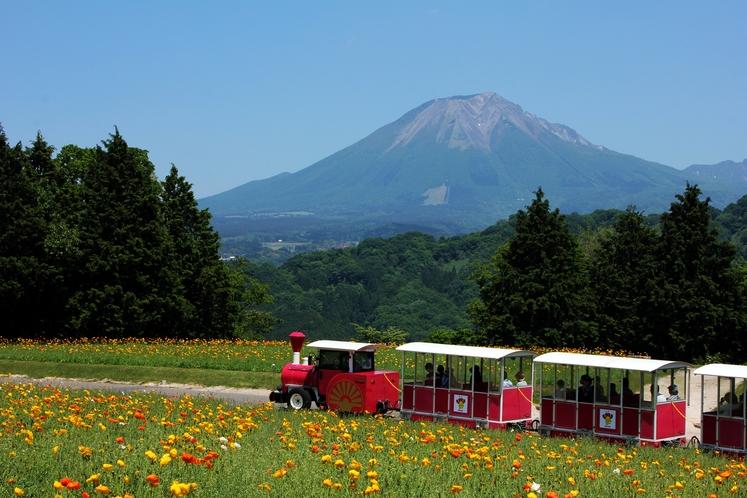 鳥取花回廊から見た大山