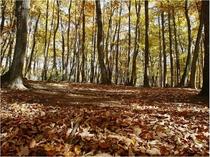 1100坪の『森のドッグラン』