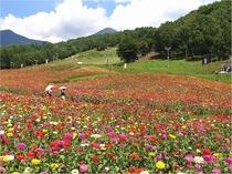 富士見高原 花の里