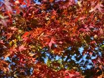 八ヶ岳高原の秋