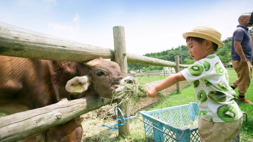 *【園内一例】牧場の牛さん