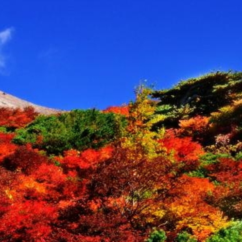 【茶臼岳の紅葉】赤と緑のコントラストが絶景です