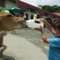 【りんどう湖LAKE VIEW】子牛のミルクあげ♪体験も充実しています