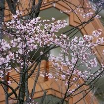 桜500×500