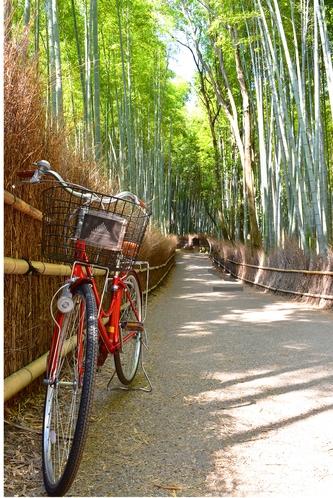 レンタサイクルで嵯峨野の竹林へ