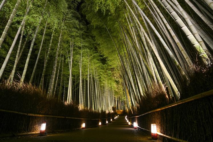 花灯路期間中の竹林