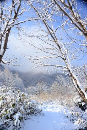 冬の緑山荘の畑