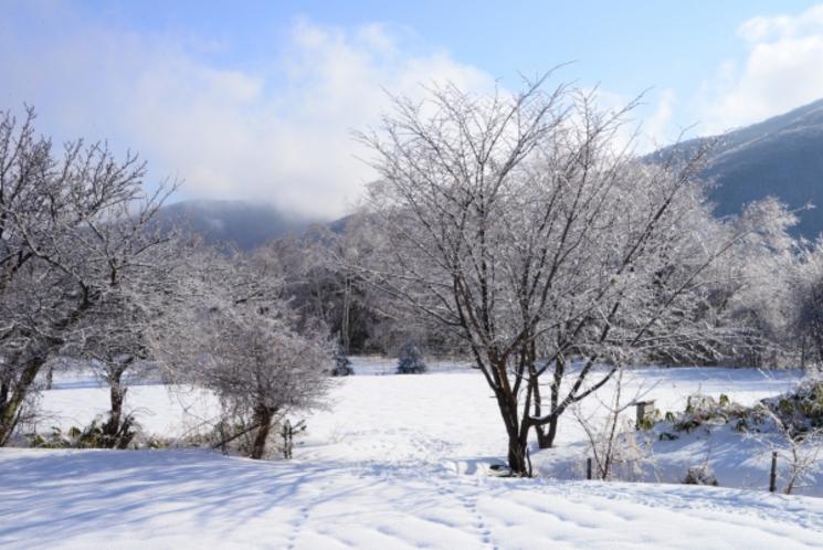 緑山荘の畑