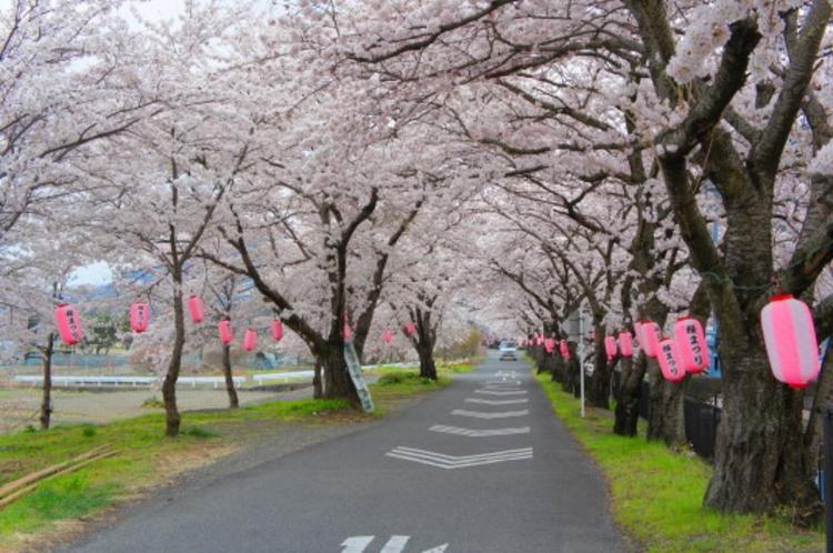 徳島せぎの桜並木