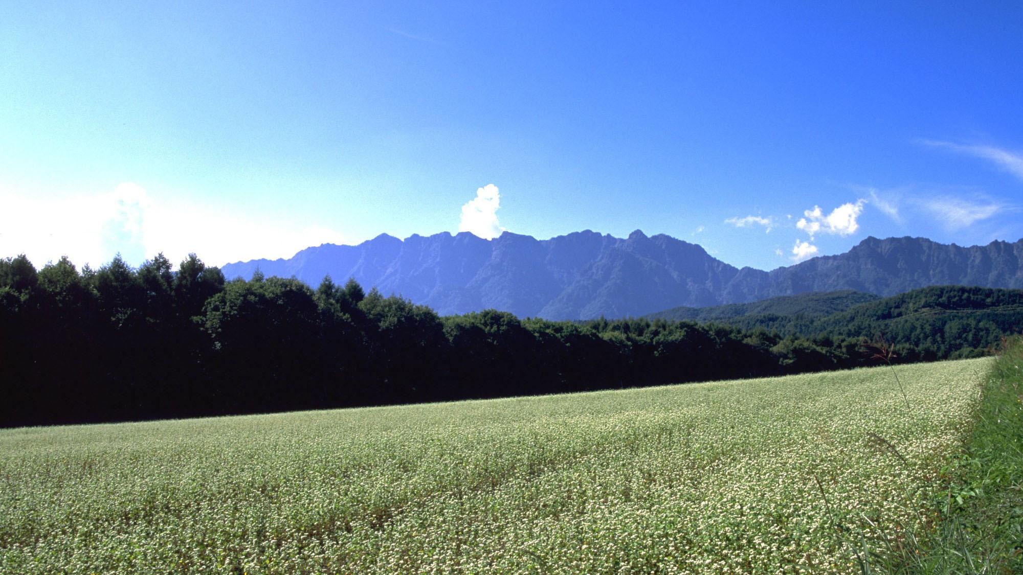戸隠高原そば畑(写真提供:長野県観光機構)