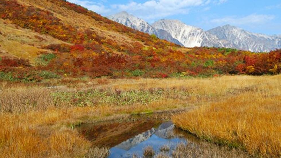 *【周辺観光】八方池の水面に白馬連峰の山々が映りとても神秘的な光景に出会えます。