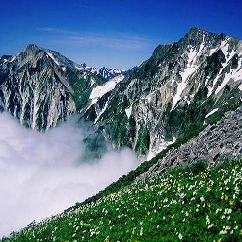 北アルプスの雲海と高山植物