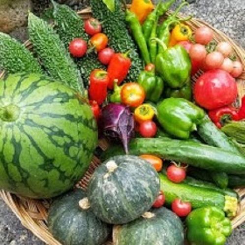 境内で収穫した新鮮な野菜