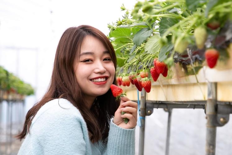 """【いちご狩り】全国でも珍しい""""赤・ピンク・白""""3色のイチゴを食べ比べ♪"""