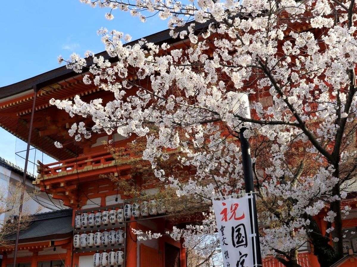 八坂神社 桜