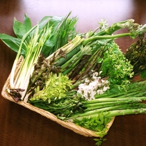 春~初夏限定の地物山菜づくしのお料理
