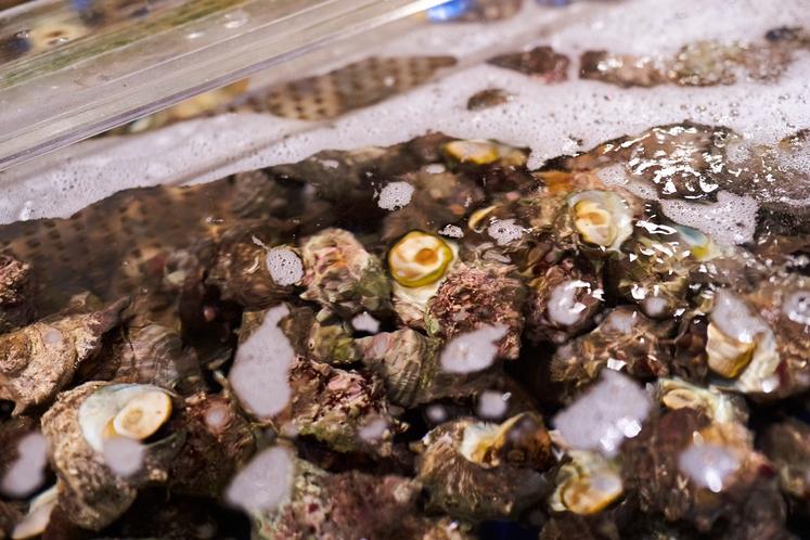 立派な活サザエが毎日いっぱい登場!水槽からサザエ・ハマグリ・ホンビノス貝をとって焼いてね♪