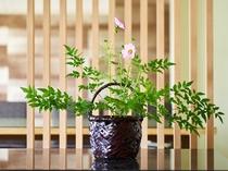季節の草花(一例)