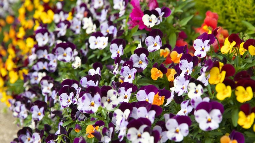 ホテル周辺では、季節によっては美しい花々が楽しめます。大村公園も徒歩圏内!