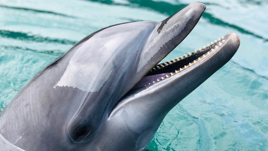 *【壱岐イルカパーク】当館から車で約5分。イルカと至近距離で触れ合える♪大人から子供まで楽しめます!
