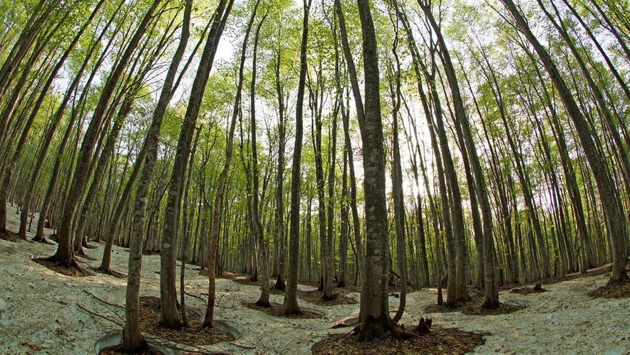 芽吹きのブナ林