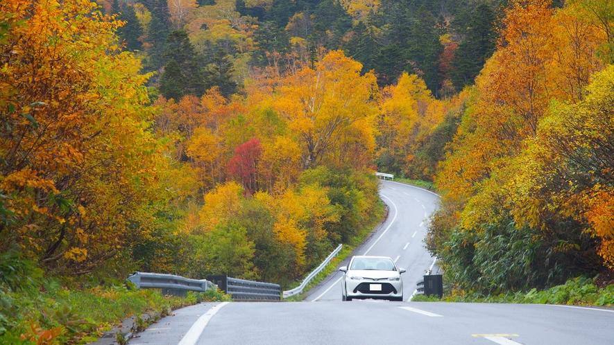 樹海ライン紅葉ドライブ