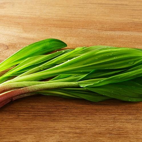■こだわりの食材■『道東の行者ニンニク』アイヌ葱とも呼ばれる、北海道のご当地食材です