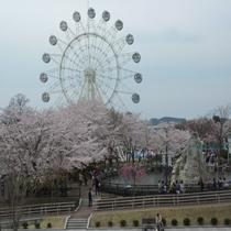 ◆八戸の桜