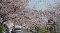 ◆八戸公園の桜