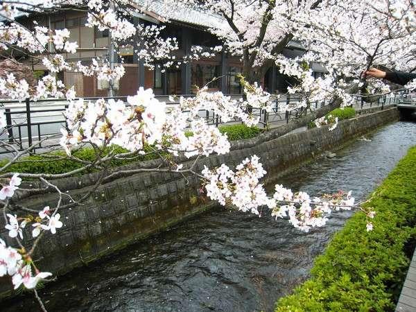 目の前がせせらぎ沿いの桜並木