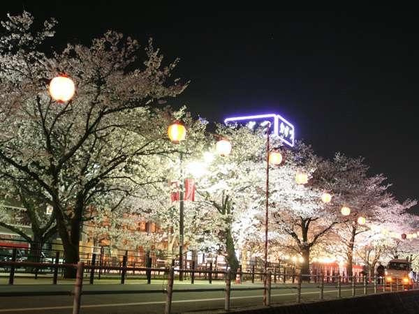 春は妖艶な夜桜をお楽しみ下さい