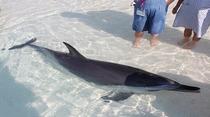 ◆「あそびーち」イルカとふれあい♪