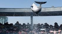 ◆大分マリーンパレス水族館海たまご
