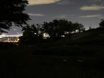 夜景をバックに舞うホタル