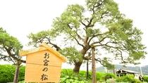 *待ち合わせスポットとしても使われるお宮の松は、熱海サンビーチのほぼ中央付近です。
