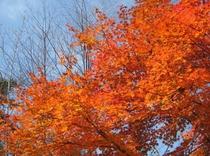 秋の紅葉5