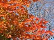 秋の紅葉4