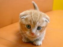 ネコちゃん 2