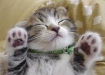 ネコちゃn 4