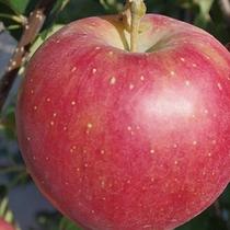 くだもの王国福島「りんご」