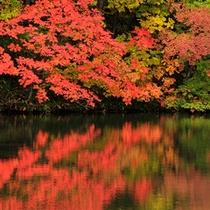 紅葉の曲沢沼